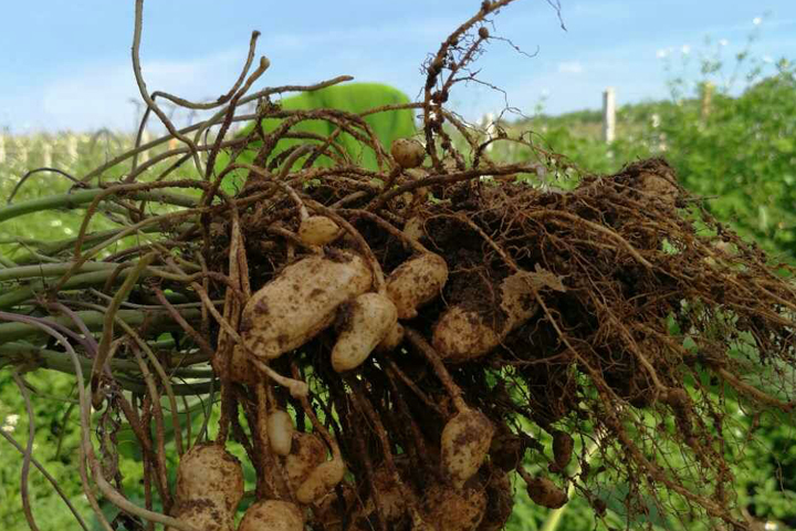 bio-organic depend